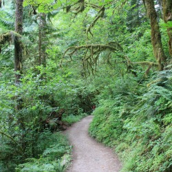 naturopathic, wholistic, alternative, bellingham, WA